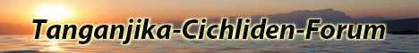 Die Community für alle Cichliden Freunde. Erfahrungsberichte zur Haltung von Tanganjika See Cichliden und zu Fischkrankheiten.